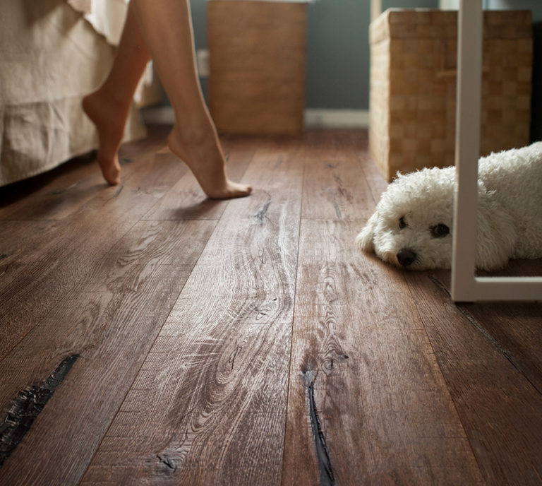Poodle lying on floor of room, feet of woman in background